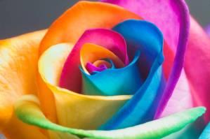 95696-rainbows-rainbow
